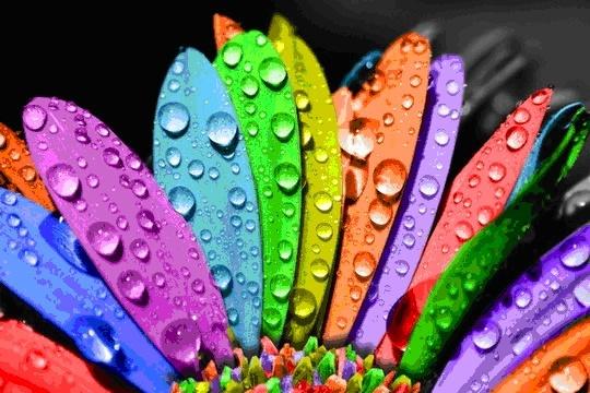 Cтеклопакеты с нанесением цветной фотопечати